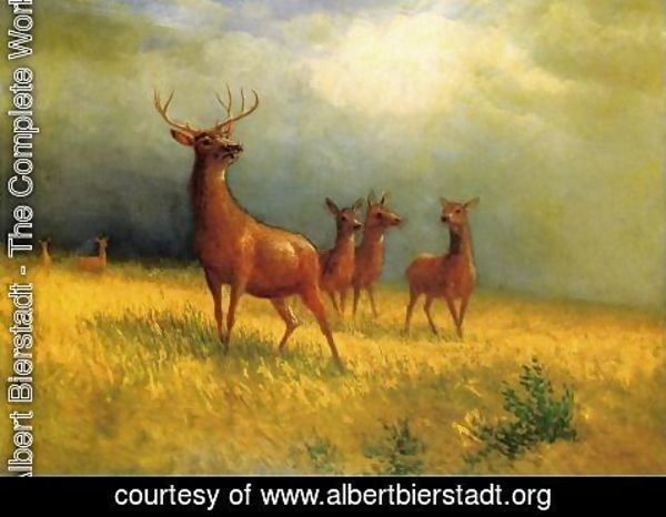 Albert Bierstadt - Deer in a Field