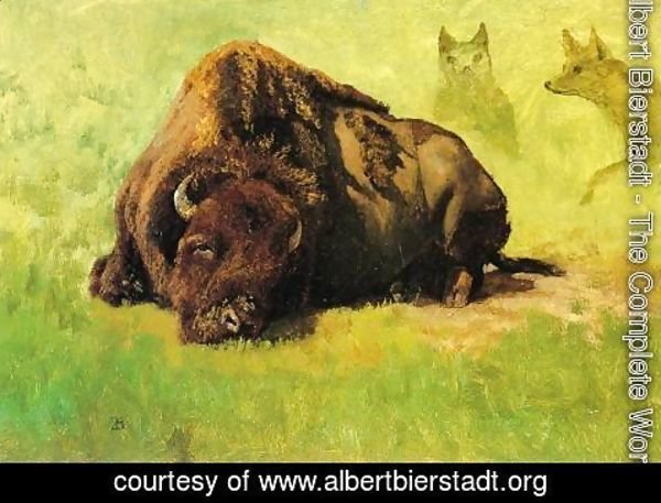 Albert Bierstadt - Bison with Coyotes in the Background