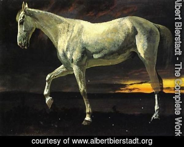 Albert Bierstadt - White Horse and Sunset