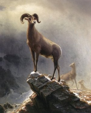 Albert Bierstadt - Rocky Mountain Sheep 1