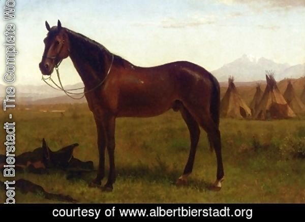 Albert Bierstadt - Portrait of a Horse