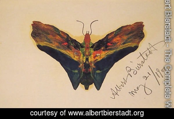 Albert Bierstadt - Butterfly (second Version)