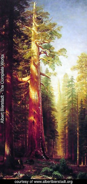Albert Bierstadt - The Great Trees  Mariposa Grove  California