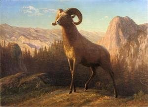 Albert Bierstadt - A Rocky Mountain Sheep  Ovis  Montana